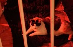 circus star tella in the cage
